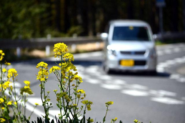 安い・便利が理由!?増え続ける軽自動車の需要